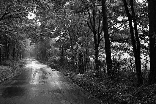 Rainy East Texas Back Road by Bryan Davis