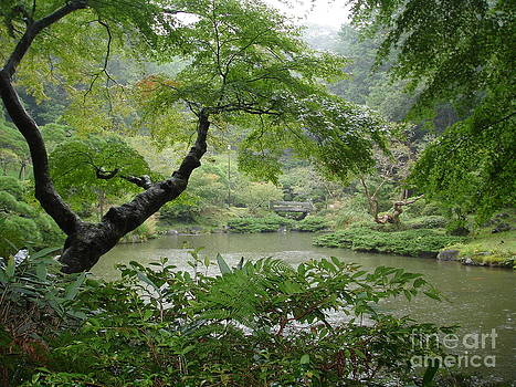 Danielle Groenen - Rainy Garden Pond in Taiwan