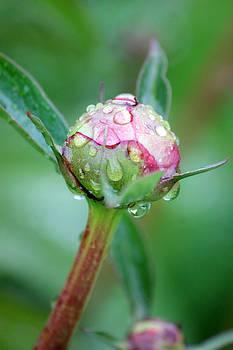 Connie Zarn - Rainy Morning