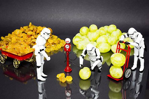 Raisins to Grapes by Tony Sullivan