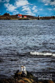 Ram Island Lighthouse Boothbay by Brenda Giasson