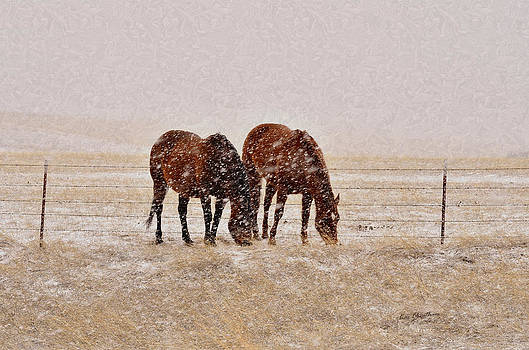 Kae Cheatham - Ranch Horses in Snow