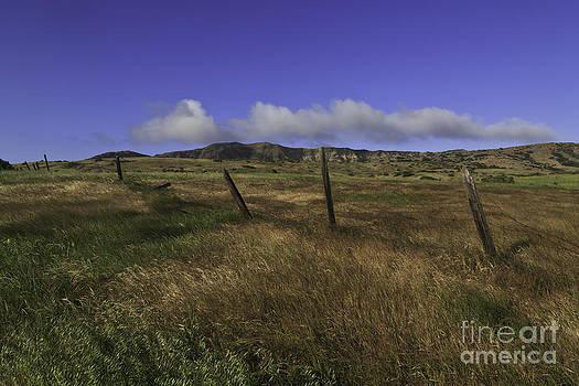 Ranching days by Tim Hauf