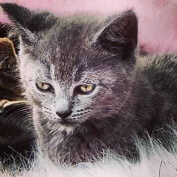 Random #kitten Photo by Brian Harris