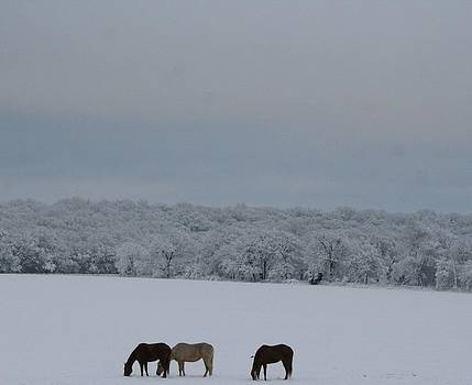 Rare Snow by Lisa Browning