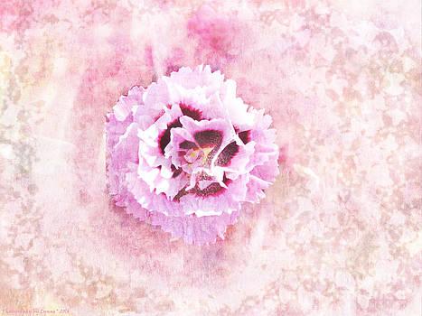Gena Weiser - Raspberry Dianthus
