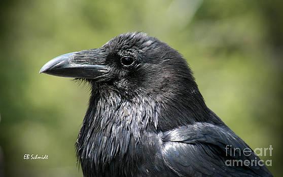 Raven by E B Schmidt