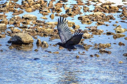 Raven Passing Through by Skye Ryan-Evans