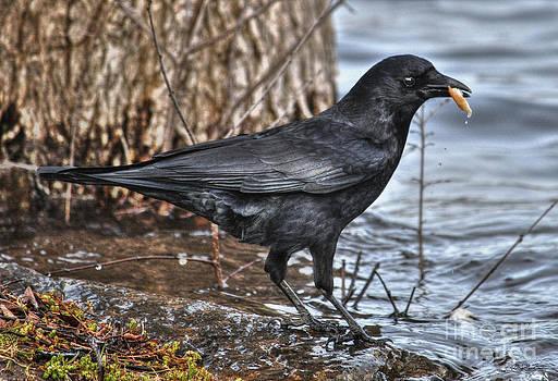 Raven's Find by Skye Ryan-Evans