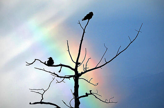 Raven's Rainbow by Ron Day