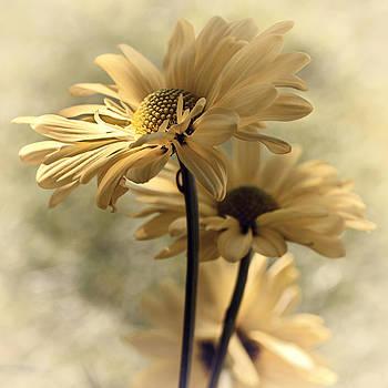 Ray of Hope by Darlene Kwiatkowski