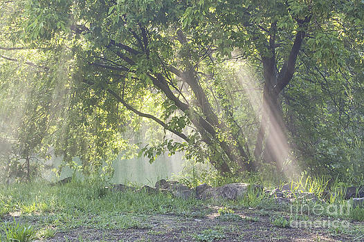 Rays Of Light by Janique Robitaille