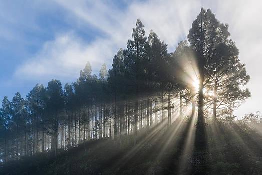 Rays of sunlight by Johan Elzenga