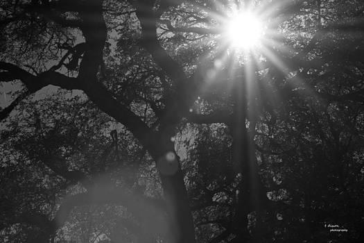 Rays by Teresa Dixon