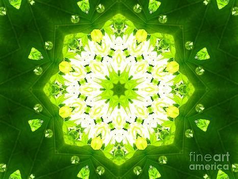Rays through green window by Dana Hermanova