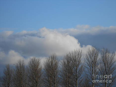 Reach for the Clouds by David Paterson