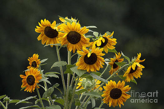 Cris Hayes - Reach for the Sun