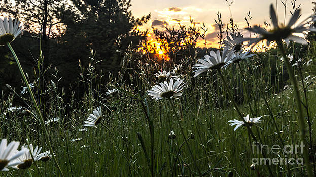 Reach for the Sun by Mike Vosburg