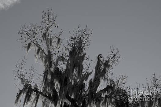 Kathi Shotwell - Reach