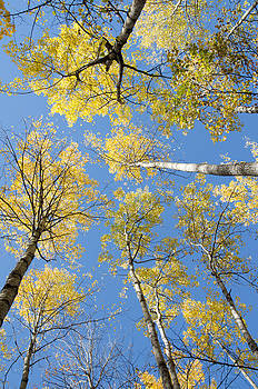 Reaching for the sky 1 by Rob Huntley