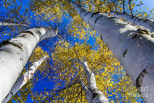 Reaching for the Sky by CJ Benson