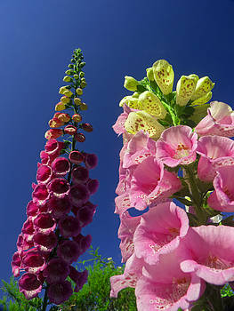 Reaching for the sky by Robert Gipson