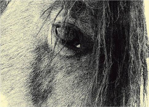 Read My Eyes by Patricia Keller