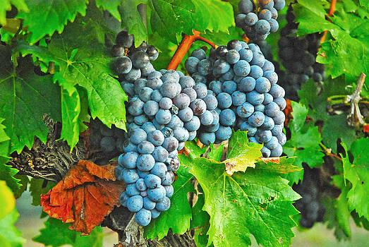 Robert Anschutz - Ready for Harvest