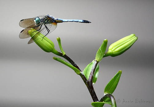 Ready For Takeoff by Anne Babineau