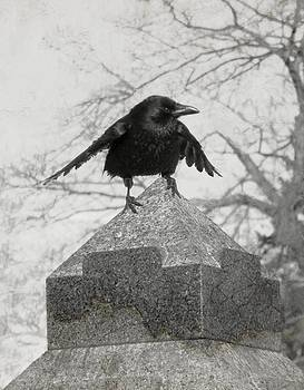 Gothicrow Images - Ready To Fly