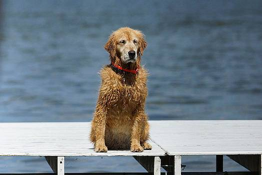 Ready To Swim Again by Thomas Fouch