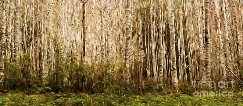 Vivian Christopher - Red Alder Grove Panorama Abstract