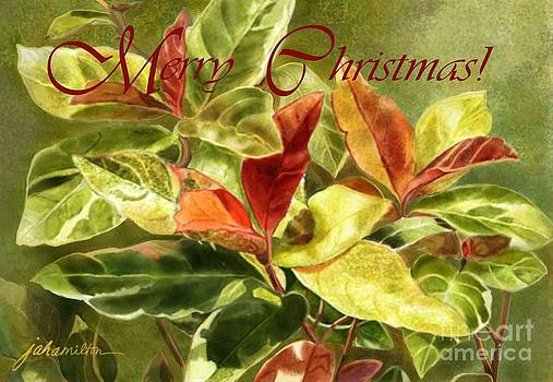 Red and Green Leaves Christmas Card by Joan A Hamilton