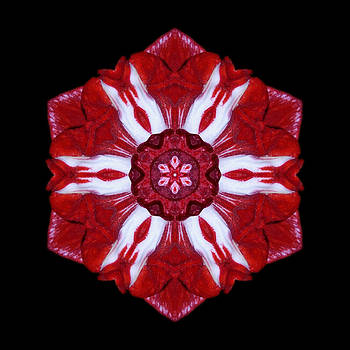 Red and White Amaryllis IV Flower Mandala by David J Bookbinder