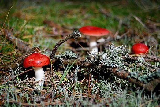 Red And White Mushrooms by Sonya Kanelstrand