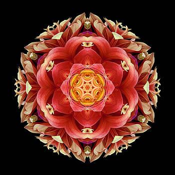 Red and Yellow Dahlia III Flower Mandala by David J Bookbinder