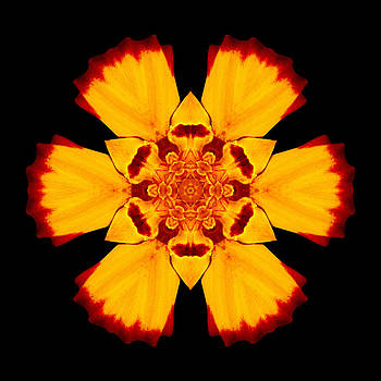 Red and Yellow Marigold II Flower Mandala by David J Bookbinder