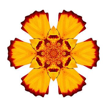 Red and Yellow Marigold II Flower Mandala White by David J Bookbinder