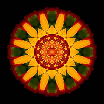 Red and Yellow Marigold V Flower Mandala by David J Bookbinder