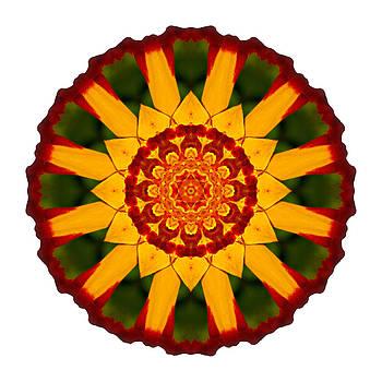 Red and Yellow Marigold V Flower Mandala White by David J Bookbinder