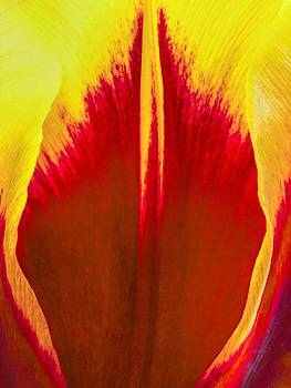 Jan Hagan - Red and Yellow tulip edges