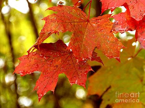 Christine Stack - Red Autumn Leaves
