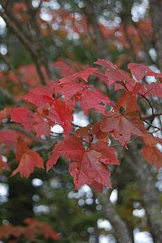 Red Autumn by Lisa Lamir