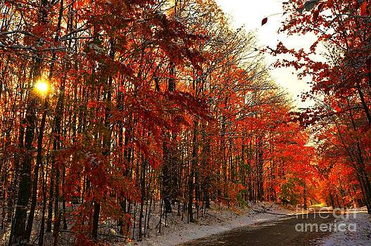 Terri Gostola - Red Autumn Road in Snow