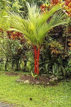 Bob Phillips - Red Bamboo and Codiaeum