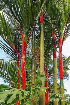 Bob Phillips - Red Bamboo