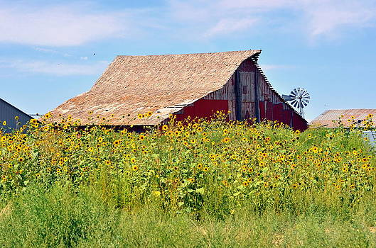 Red Barn In Summer by Clarice  Lakota