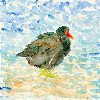 Red beak black water bird by Yumi Kudo