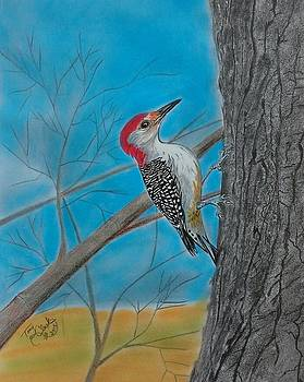 Red bellied woodpecker by Tony Clark