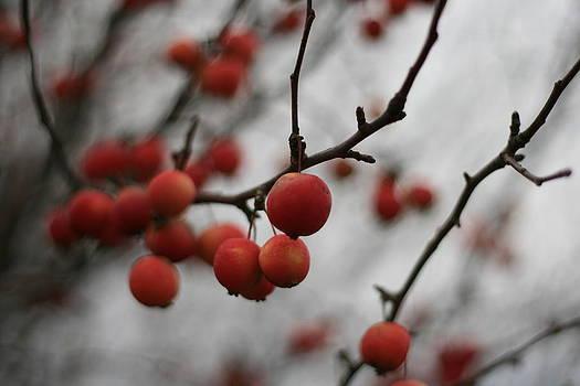 Red Berries by Brady D Hebert